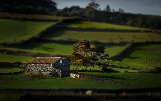 House and Tree by Linhares - TiltShift Effect Photo Contest