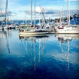 Wellington harbour in the summer light