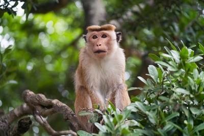 Set Your Monkey Free