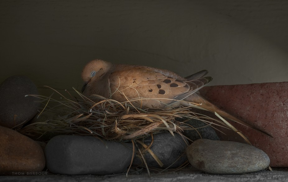Came out of the house to find this lady under the eaves, perched atop the rocks we put up to disc...