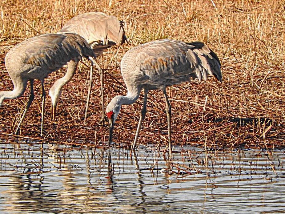 At Wheeler National Wildlife Refuge in Decatur, Al.