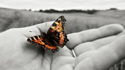 Fluttery Friend