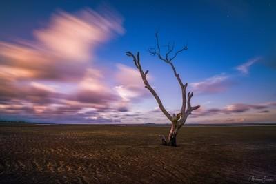 Desert sky's