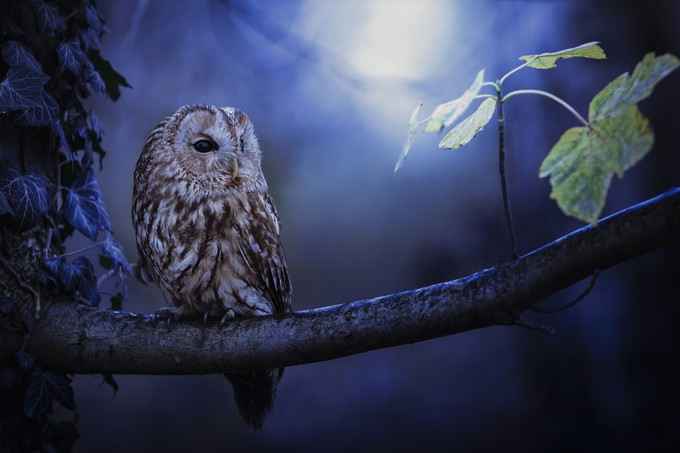9N4A0870 by Anneliese-Photography - Only Owls Photo Contest