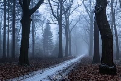 Fading Winter Path
