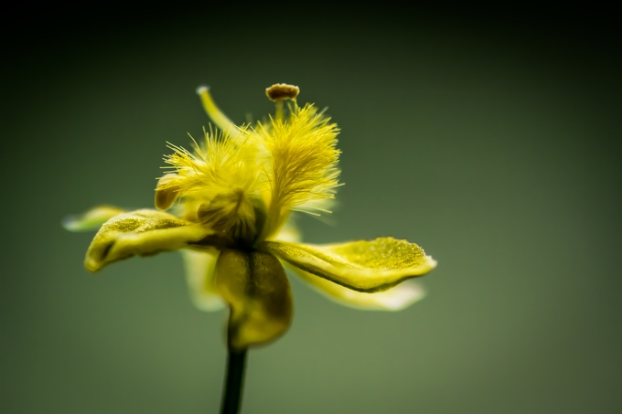 Little Yellow by novakmiler - Show Minimalism Photo Contest