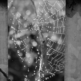 Went for a walk on cold morning, frost was melting, saw this framed spider's web with lovely collection of water droplets framed in between ...