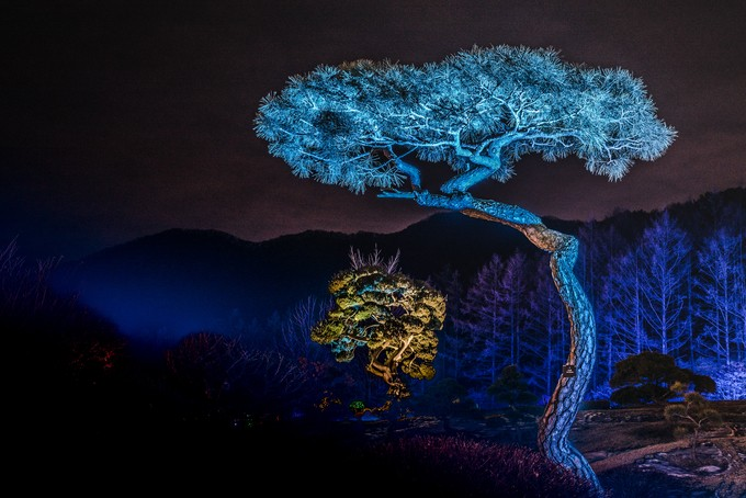 The tree by iordandanielteodorescu - Explore Asia Photo Contest