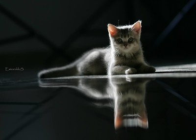 kitten and it's reflection