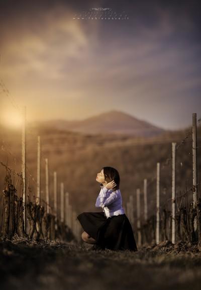 Sunset Magic Among Vineyards