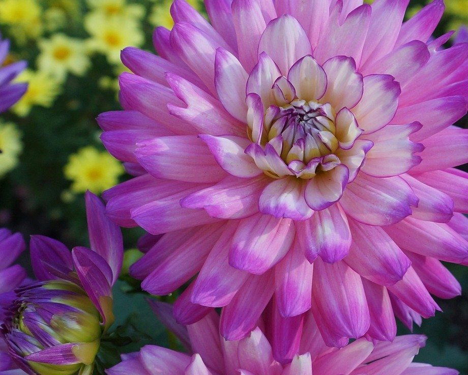 A flower bursting with colour on Vancouver Island.