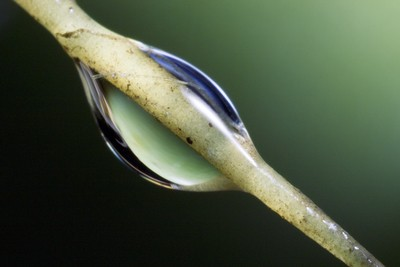 Water Drop on a Cactus Needle