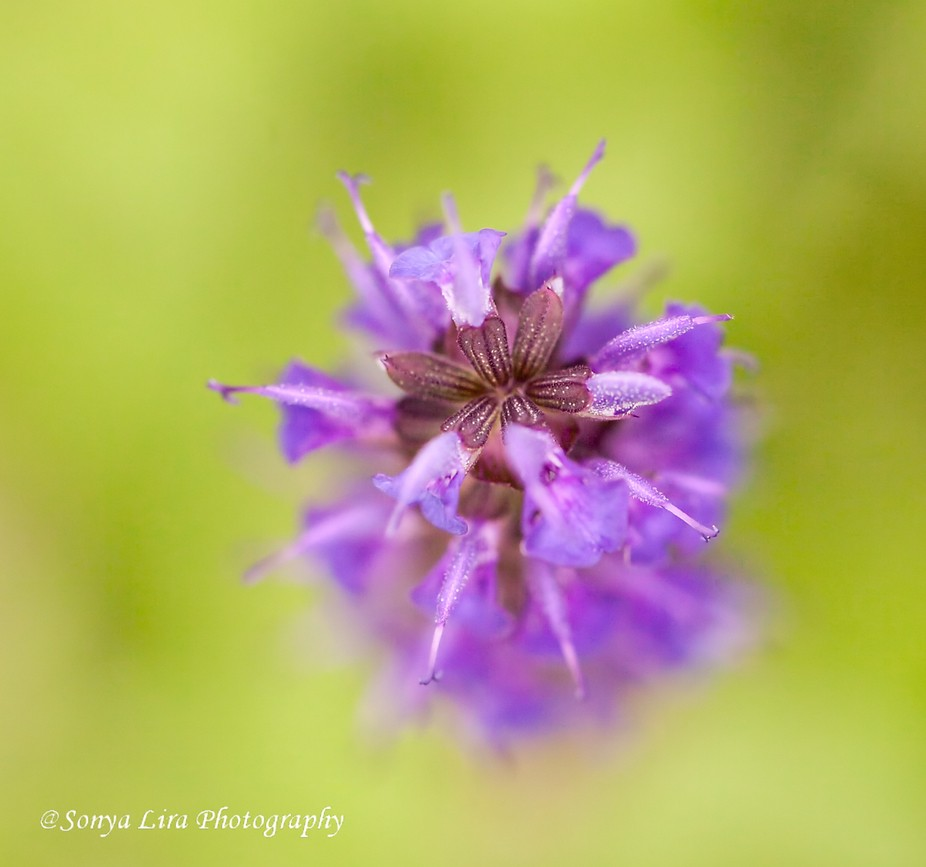 When using a macro lens you are sure to see details in tiny flowers you never knew were there.