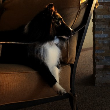 Ace at golden hour relaxing on the lanai couch
