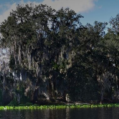 st johns river landscape