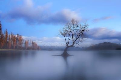 Misty Morning at Wanaka