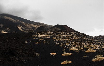 Loneliness on a volcano