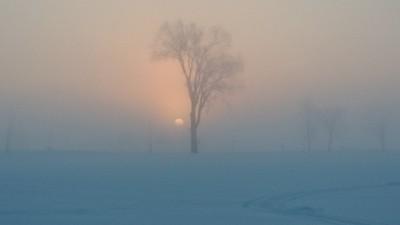 Frozen Sunrise in the Fog