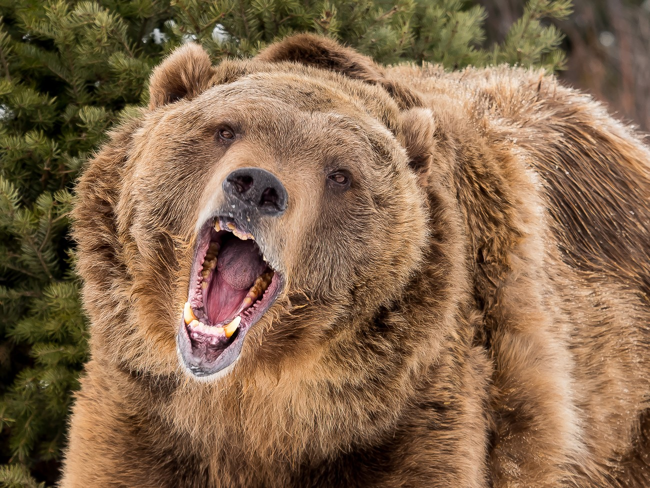 If You Like Bears, You Will Love These Photos