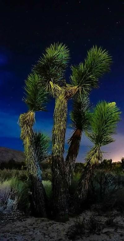 Star Gazing