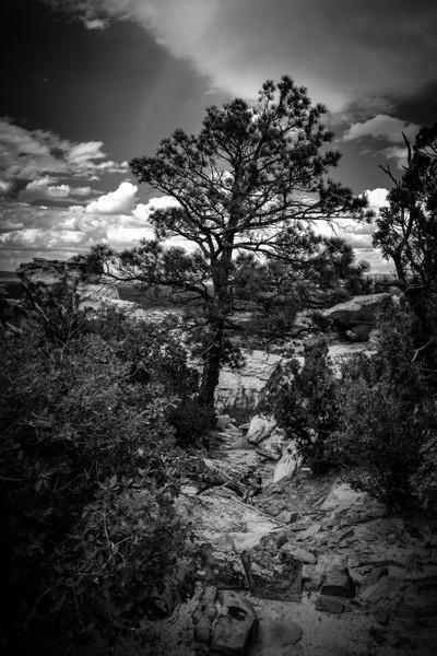Desert Tree v1