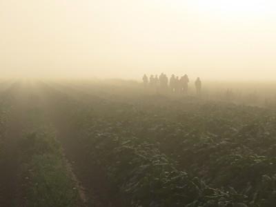 Farm Mornings
