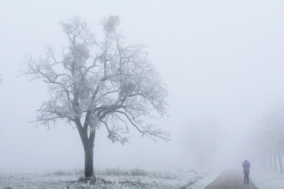 Wondering the fields during a sudden ice fog. I took this near my house in Germany when I went ex...