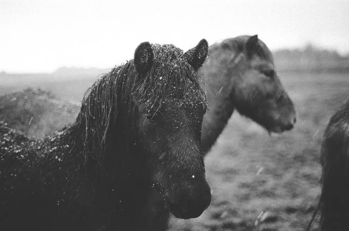 A Dream by jtmoody - Animals In Black And White Photo Contest