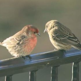 In a little town in Tennessee on our porch while sharing the love with my love before breakfast , I caught a glimpse of these lovebirds!  One lit...