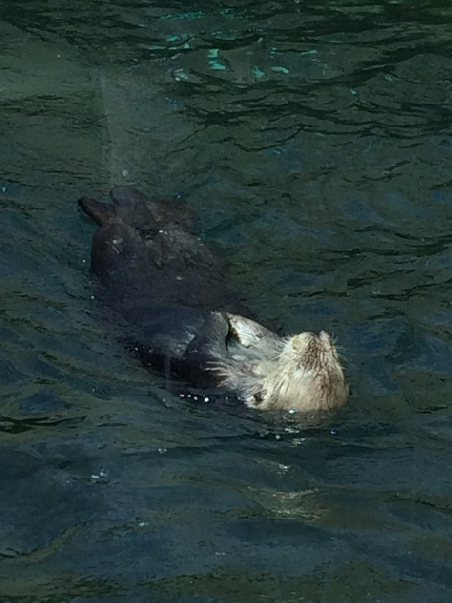 On my trip to Vancouver I saw this cute lil guy swimming..