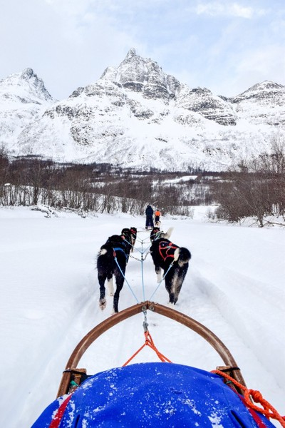 DogSledding-1