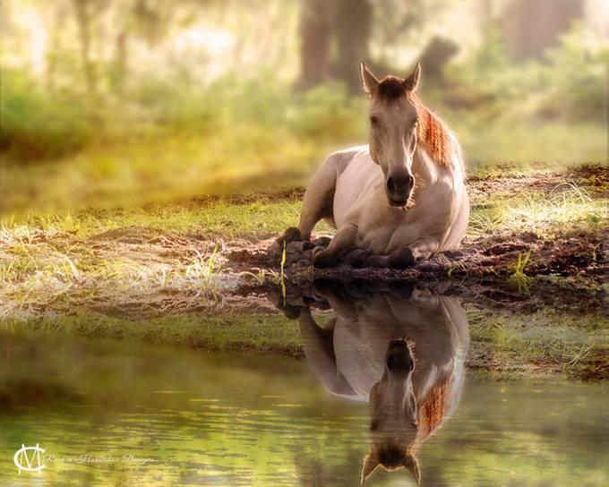 Reflecting by rockinhorseshoedesigns - Stunning POV Photo Contest
