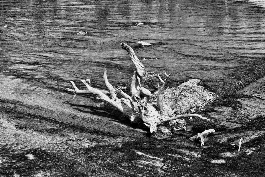 Taken at Yellowstone. It's a decaying tree or tree branch. It turned completely white be...