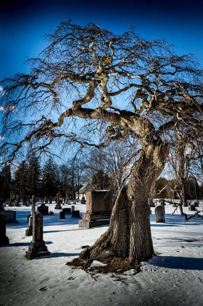 Graveyard-tree-1
