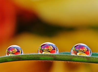 Three little drops of heaven