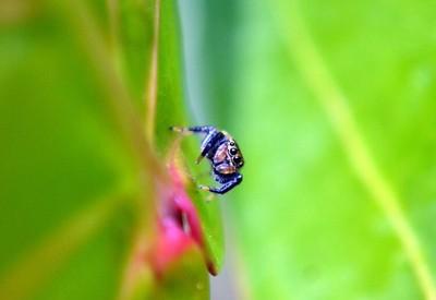 Araña macro