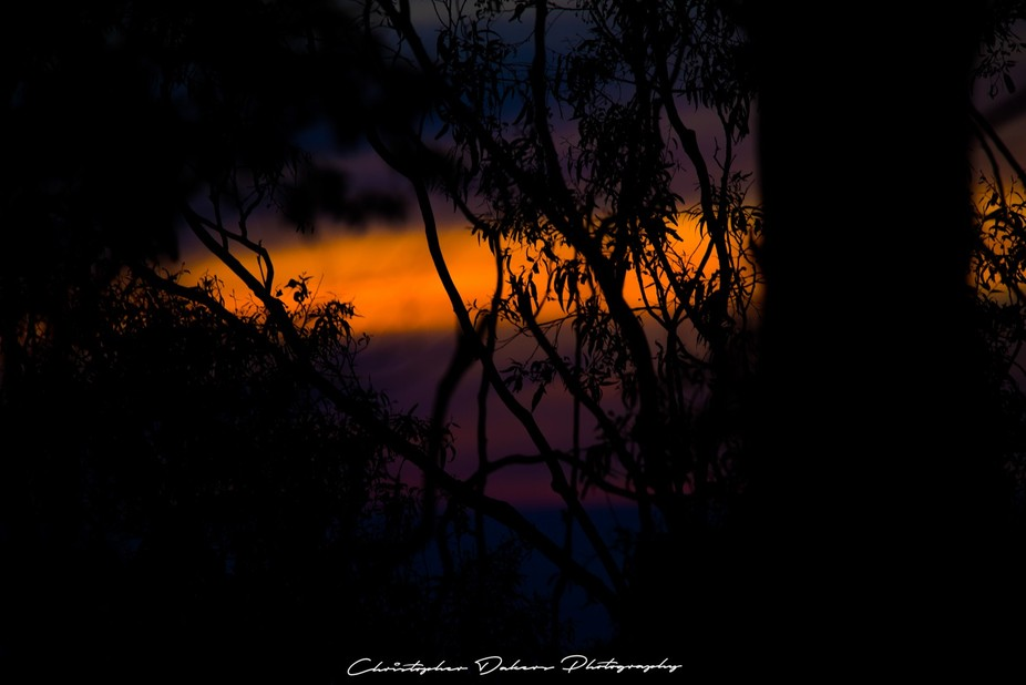 Gum Tree Sunset
