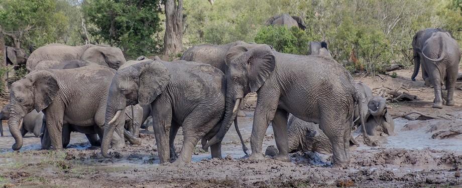 Elephants getting n bath in kruger national park