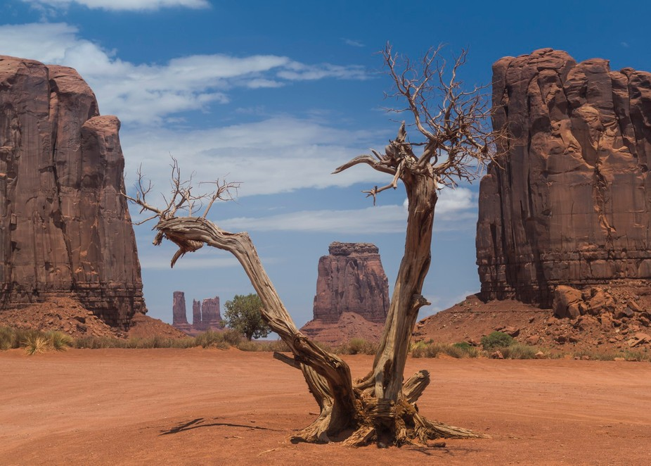 A dead tree stands in the red rock plains near tall pillars of stone in Monument Valley