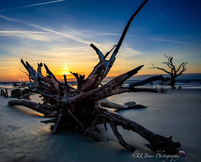 Bull's Island located of the coast in Awendaw, South Carolina. This was my 1st trip since Hurricane Matthew in 2016. So many of the trees have been knocked down and have been moved. It is sad and exciting at the same time.