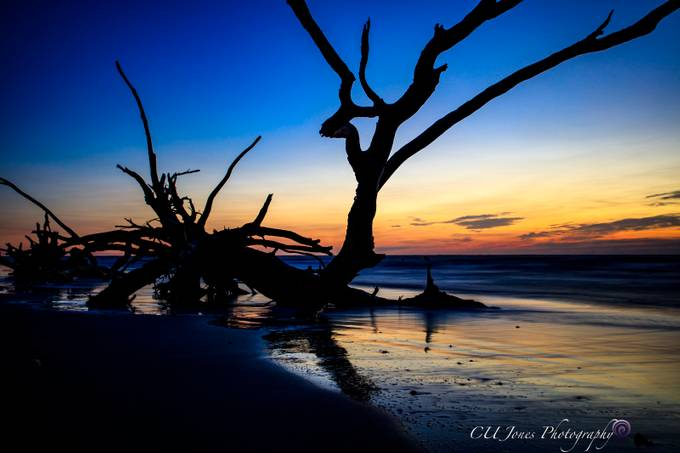 Bull's Island is located in Awendaw, South Carolina. My 1st trip to the Island since Hurricane Matthew in 2016. Many trees have been knocked down and moved around. It is sad and exciting at the same time.