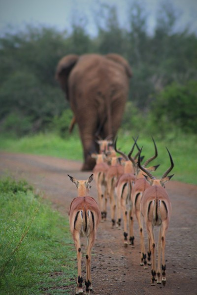 To Safari in Africa is to see its Beauty!!