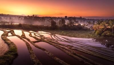 Bali Rice Terrace Sunrise