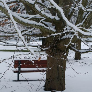 Bench in the Snowy Parksville Park 3 feb 2017