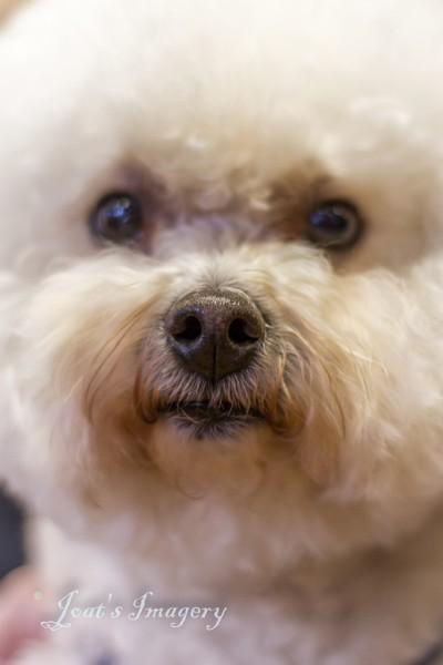 Cutie nose best