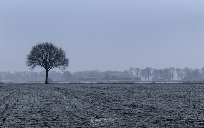 Farmland Mist