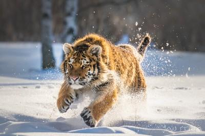 Kitty & Snow