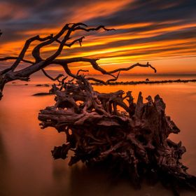 I took this shot a couple weeks ago at Driftwood Beach on Jekyll Island, GA. The color in the sky right at sunrise was incredible! I decided to s...
