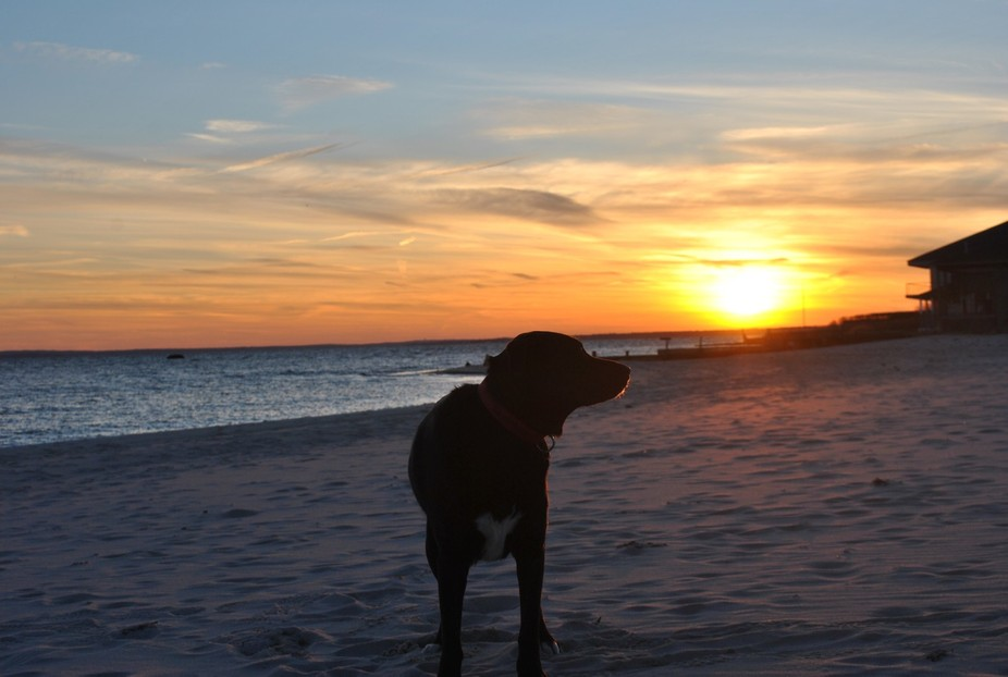 Black Dog looking for the perfect sunset