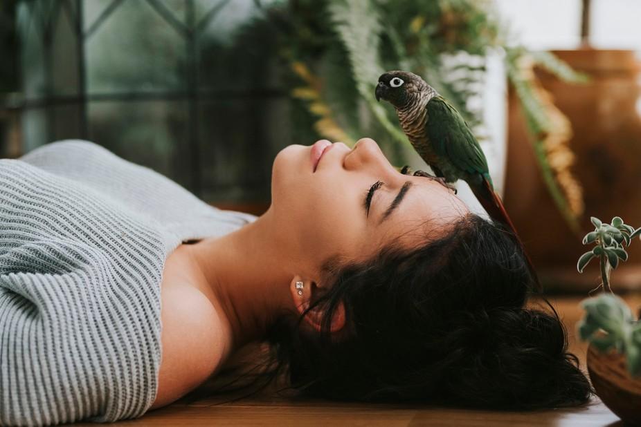 Parrot IV